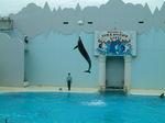 イルカのジャンプ!